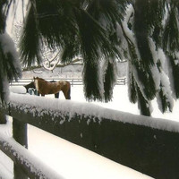 Winter in the Horse Paddock Animal Photography on Blank Note Card - fresh fallen snow
