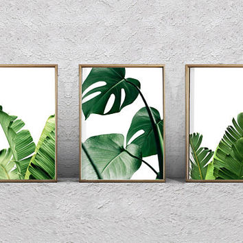 Set of 3 Leaf Prints Foliage Green Wall art Banana Leaf Palm Monstera Tropical Decor Coastal Art Minimalist Poster Large Printable Botanical