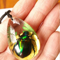 Beetle Pendant Necklace Rutelian Beetle Necklace Insect Jewelry Unisex Novelty Jewelry