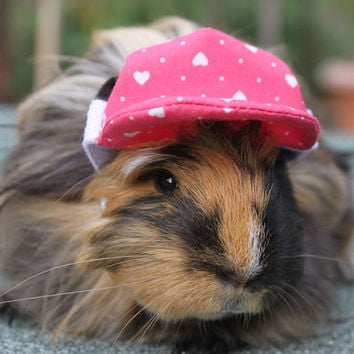 Loveheart cap for you  guinea pig or samall pet . Protect those little peepers from the sun .