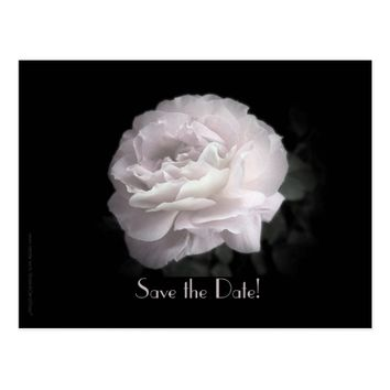 Save the Date 35th Anniversary Party Pale Pink Postcard