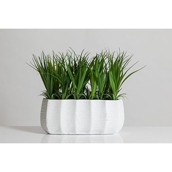 """9"""" Grass in White Cement Pot - Cacti Collection"""