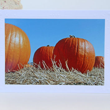 Big Orange Pumpkins Photo Greeting Card, Blank White Notecard for Thanksgiving and Fall, Fine Art Photography, All Occasion Card