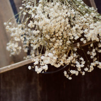 Farmhouse decor, romantic wall art, girly art, bedroom art, rustic home decor, babys breath, cottage style art, fine art photo, nursery art
