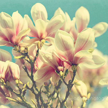 "Shabby chic home decor, ""After the winter"" Magnolia fine art print, flowers, pink, aqua"