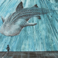 Whale Shark Aquarium Fine Art Print