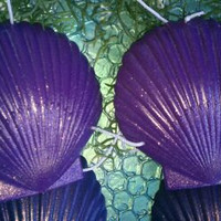 Emily Angelfish MEDIUM Purple Mermaid Sea Shell Bikini Top 4ur Tail ARIEL SEASHELL