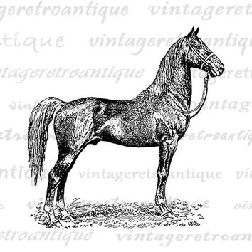 Antique Horse Graphic Digital Printable Farm Animal Download Image Vintage Clip Art Jpg Png Eps  HQ 300dpi No.3536