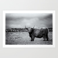 This is Scotland: The Shaggy Cow! Art Print by GuyButlerPhotography