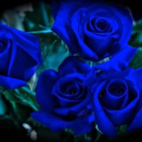 Truest Blue Rose Bush Flower Seeds 10 Stratisfied Seeds - Treasuresbylee Exclusive