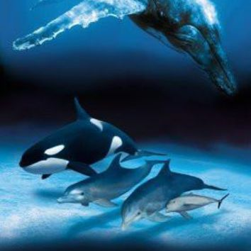 Dolphins And Whales Poster 16inx24in art 16inx24in
