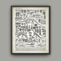Dinosaur Paleontology Art Print - Prehistoric Animals Poster - Geology Student Chart - French Fossil Book Plate Paleontology Illustration