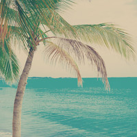 Coco Palm in the Beach Art Print by AC Photography