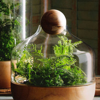 Small Danish Terrarium