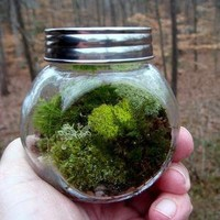 CARMIE Jar Glass Lichen and Moss Terrarium Great by MossTerrariums