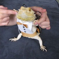 Adorable Handmade Tuxedo & Matching Top Hat for your Bearded Dragon