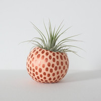 Peach & Copper Air Plant Planter Pod. Hand painted Air Plant Terrarium. Apricot Metallic Copper Spots. Modern Planter for Mother's Day Gift