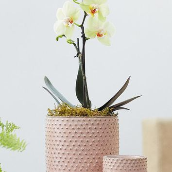 "Pink Hobnail Ceramic Everly Flower Pot - 5.5"" Tall x 5"" Wide"