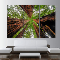 Sequoia Trees canvas print wall art , extra large wall art, Big Basin Redwoods State Park nature forest canvas print wall art t346