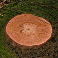 "sixteen (16) Round 7.5"" to 8.5"""" solid Pine treated round wedding charger centerpiece table decoration"