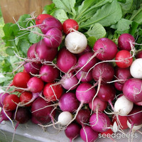 Easter Egg Radish Heirloom Seeds - Non-GMO, Open Pollinated, Untreated