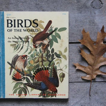 vintage birds reference book / study of birds / childrens book
