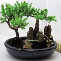 9GreenBox - BONSAI Juniper Tree Zen Garden With Pool Fishman
