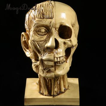 Skull Skulls Halloween Fall MagiDeal Realistic Skeleton  Muscle Head Resin Model Medical for Teaching Painting Model Studying Statues Yellow Calavera