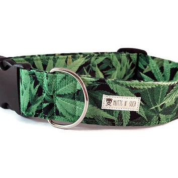 Novelty Marijuana Dog Collar - Pot Leaf Weed Leaf Dog Collar - Boy Dog Collar - Sweet Leaf - Metal Buckle Collar - Martingale Collar