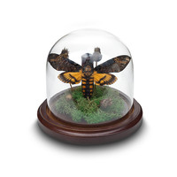 Death's Head Moth in Bell Jar Glass Dome
