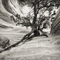 Black & White Photography, Trees in the South West, Fine Art Prints, Nature Photo Cards, Old  Ancient
