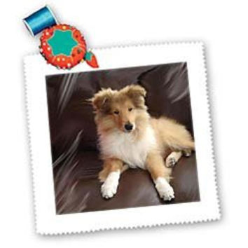 3drose Rough Collie Puppy Square Quilt Sheet, 10 by 10-Inch