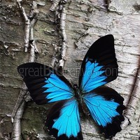 Zoom: Blue Butterfly on Birch   Great Big Canvas