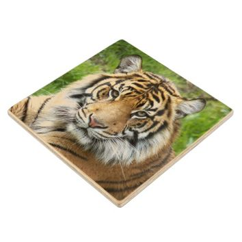 Big Cat Tiger Photo Wood Coaster
