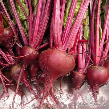 Bulls Blood Beet Heirloom Seeds - Non-GMO, Open Pollinated, Untreated
