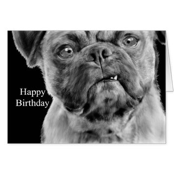 Birthday with Humorous Pug Dog Pencil Drawing Card