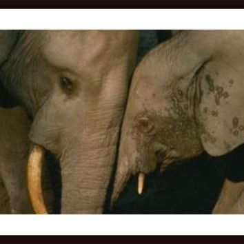 Female African Elephant Bonds With Her Baby, framed black wood, white matte