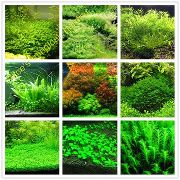 New aquarium grass seeds (mix)