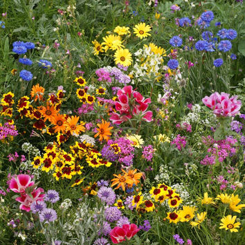 BULK 2,000 Heirloom Flower Seeds, Wildflower Mix, Cover a Large Area, Attracts Butterflies, Annual and Perennial Mix