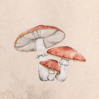 amanita muscaria | LIMITED EDITION print
