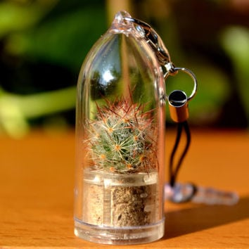 Shining Knight Cactus Live Terrarium Charm for iPhone, Galaxy & Cell Phones. Genus Mammillaria Prolifera