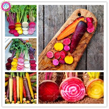 300pcs/bag Rare rainbow carrot Seeds Organic beets vegetable color radish Non-GMO Natural Growth Plants bonsai For Home Garden