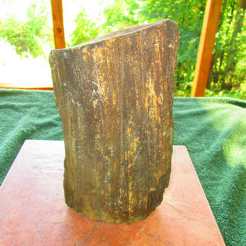 Huge 20 Pounds or More Piece of Dahlonega GA Petrified Wood From Gold Mining