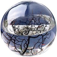 Ecosphere - Small - Buy from Prezzybox.com