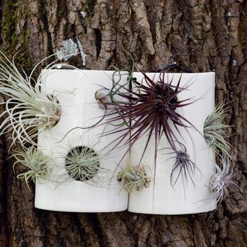 Airplant Wall Tile