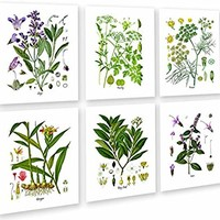 Herbs Kitchen Wall Decor Set of 6 Unframed Culinary Herbs Botanical Art Prints, Kitchen Decor, Dining Room Decor