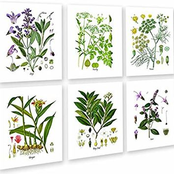 Herbs Kitchen Wall Decor Set Of 6 Unframed Culinary Botani