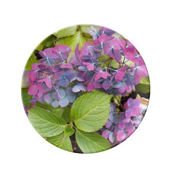 Colorful Hydrangeas Floral Dinner Plate
