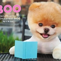 Facebook Dog Got A Book Deal | Incredible Things