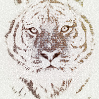 The Intellectual Tiger Art Print by Paula Belle Flores